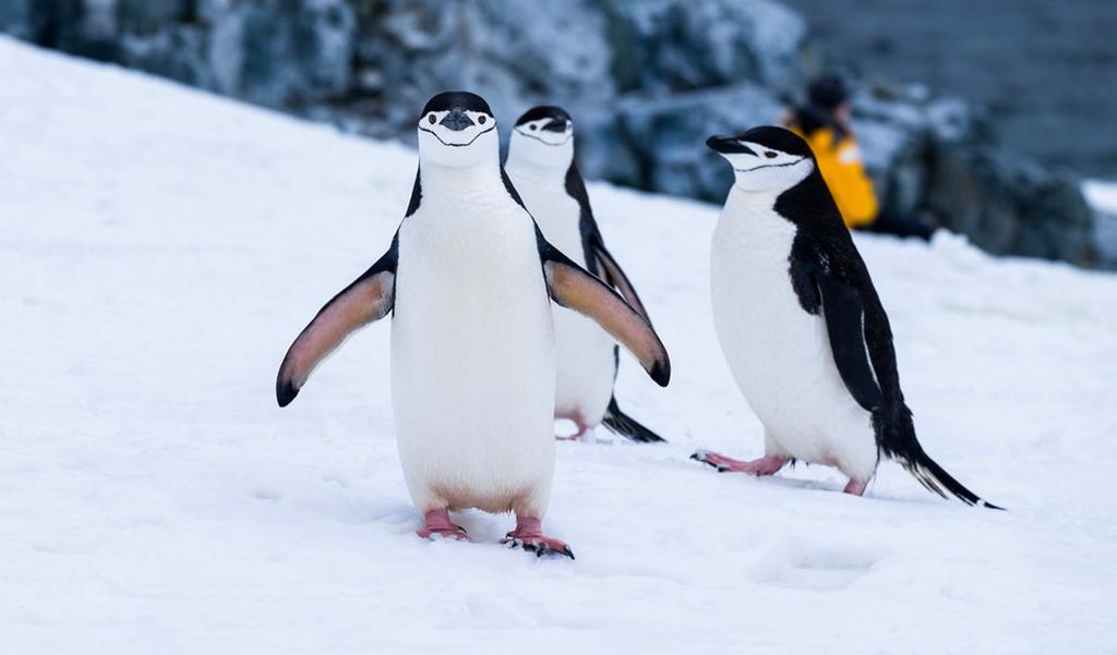 Pinguïnpoep