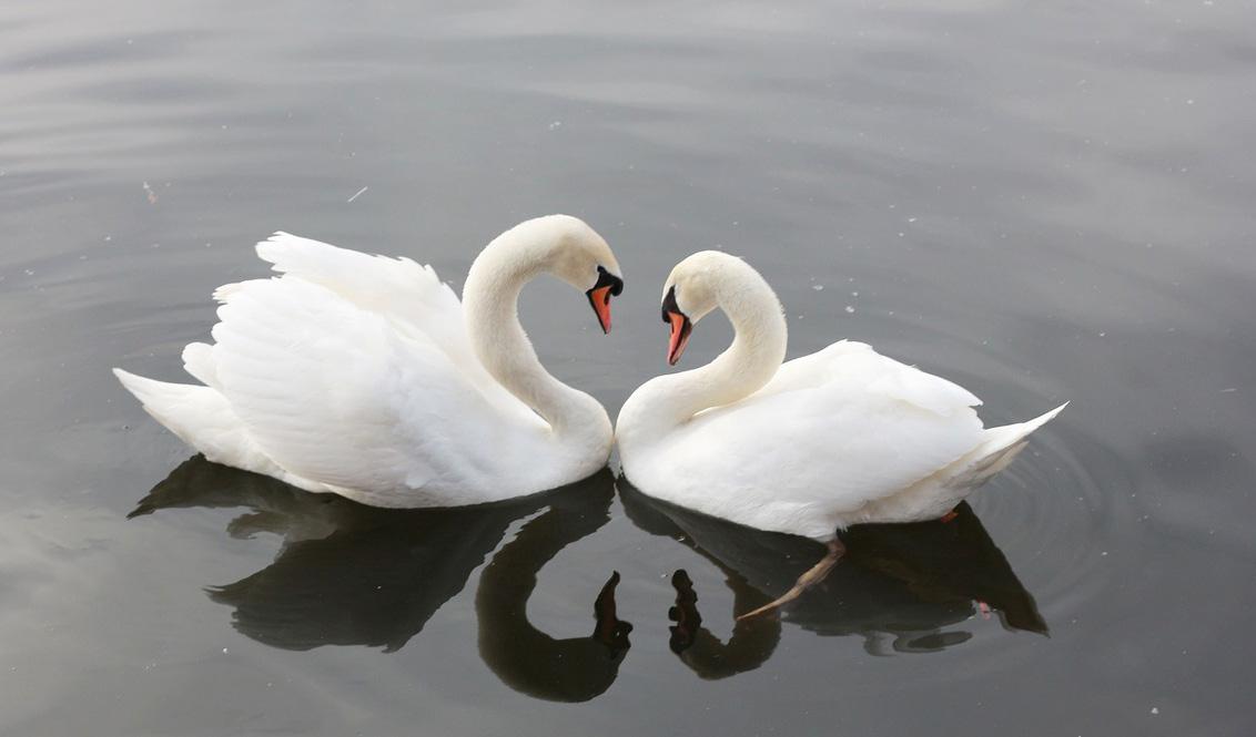 Liefde dieren