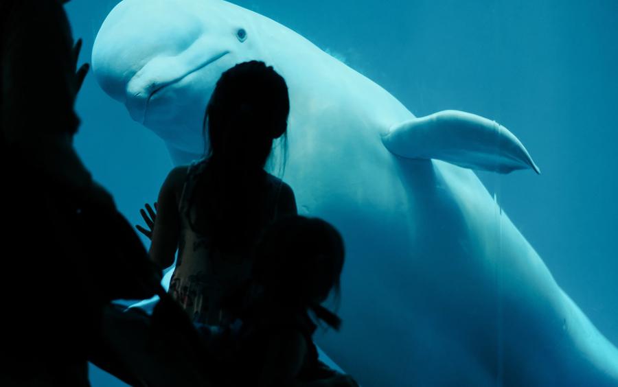 witte dolfijn