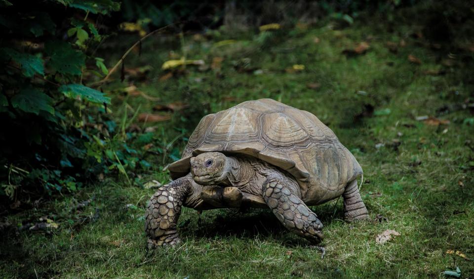Schildpad bos