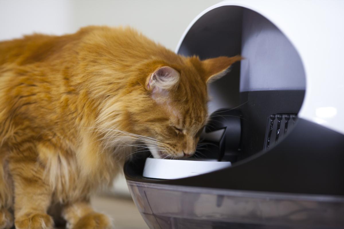 katdrinktschattigtoch