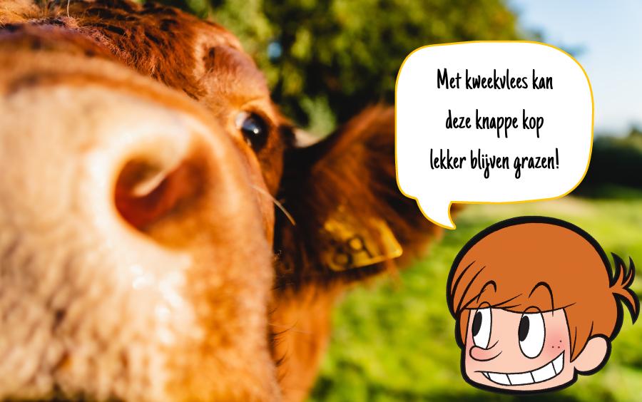 Met kweekvlees kan deze koe lekker blijven grazen